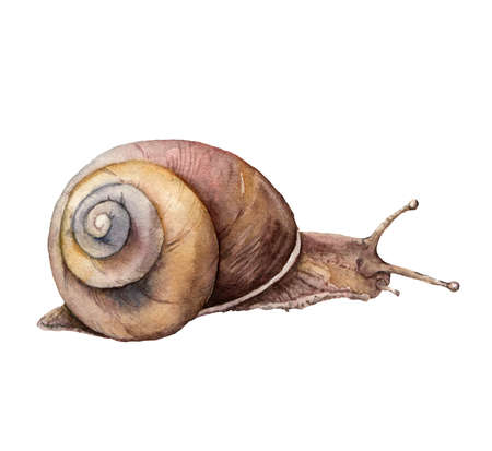 Watercolor snail. Hand painted animal isolated on white background. Wildlife illustration for design, print, fabric or background. 免版税图像