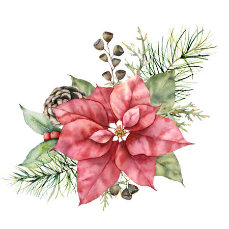 Watercolor Christmas boquet with poinsettia, cone and berries. Hand painted holiday plant with pine needles and leaves isolated on white background. Winter illustration for design, print, background. 免版税图像