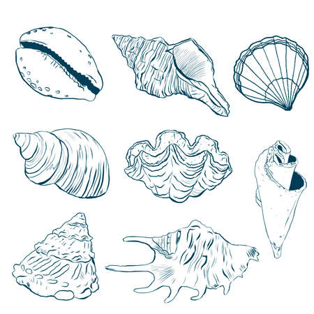 Watercolor sea shells line art set. Hand painted underwater element illustration isolated on white background. Aquatic illustration for design, print or background. 免版税图像 - 156058743