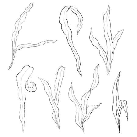 Watercolor seaweed line art set with laminaria branches. Hand painted underwater floral illustration with algae leaves isolated on white background. Kelp for design, fabric or print.