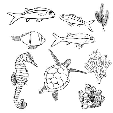 Vector underwater minimalistic set with line art animals. Hand painted fish, turtle, seahorse and coral illustrations isolated on white background. Aquatic illustration for design, print, background. 免版税图像 - 156462916