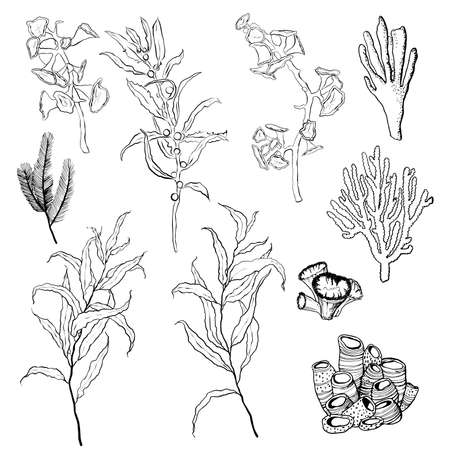 Vector underwater minimalistic set with line art plants and coral reef. Hand painted ocean illustrations isolated on white background. Aquatic illustration for design, print, interior or background.
