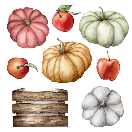 Watercolor autumn harvest set with pumpkins, apples, leaves and wooden box. Hand painted gourds isolated on white background. Botanical illustration for design, print or background. 免版税图像 - 156462919