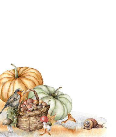 Watercolor autumn composition with robin, pumpkins, basket, mushrooms and grass. Hand painted rustic card isolated on white background. Floral illustration for design, print, fabric or background. 免版税图像