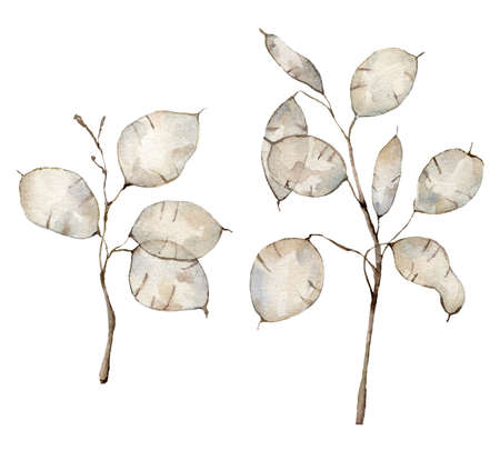 Watercolor set with lunaria. Hand painted holiday flower isolated on white background. Floral illustration for design, print, fabric or background.