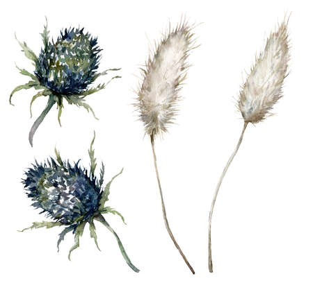 Watercolor set with blue thistle and lagurus. Hand painted delicate plant isolated on white background. Floral illustration for design, print, fabric or background.