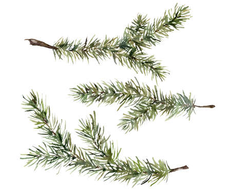 Watercolor set with fir branches. Hand painted winter holiday plants isolated on white background. Floral illustration for design, print, fabric or background.