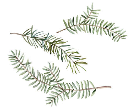 Watercolor set with blue spruce branches. Hand painted winter holiday plants isolated on white background. Floral illustration for design, print, fabric or background.