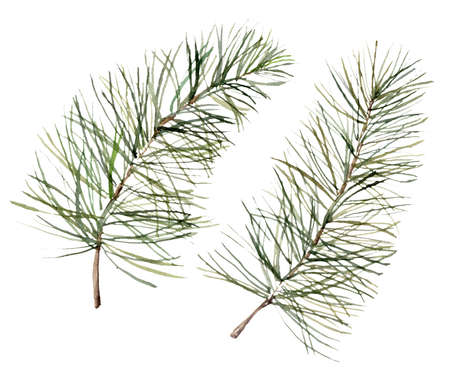 Watercolor set with pine branches. Hand painted winter holiday plants isolated on white background. Floral illustration for design, print, fabric or background. 免版税图像
