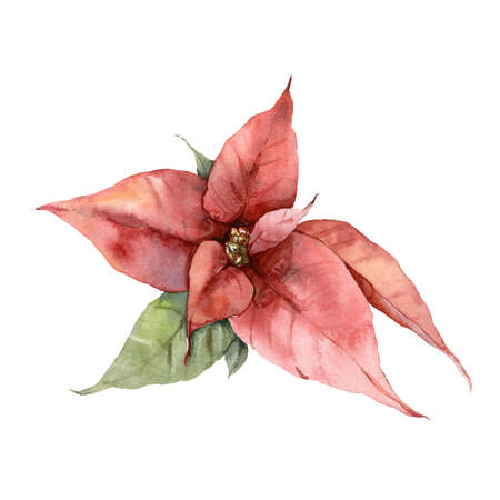 Watercolor Christmas red poinsettia and leaves. Hand painted holiday card with flower isolated on white background. Floral illustration for design, print, fabric or background.
