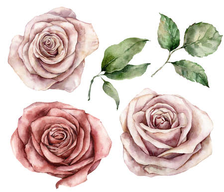 Watercolor set with pink roses and leaves. Hand painted holiday card with flower isolated on white background. Floral illustration for design, print, fabric or background.