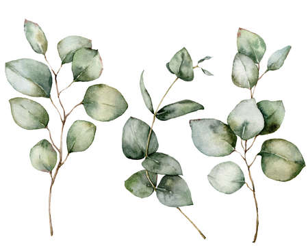 Watercolor set with silver dollar and baby blue eucalyptus. Hand painted branches and leaves isolated on white background. Floral illustration for design, print, fabric or background. 免版税图像