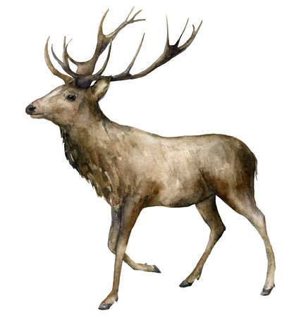 Watercolor male deer with horns. Hand painted wild animal isolated on white background. Realistic animal for design, fabric, print or background. Banco de Imagens
