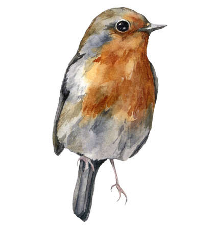 Watercolor card with robin redbreast. Hand painted winter holidays bird isolated on white background. Wildlife illustration for design, print, fabric or background.