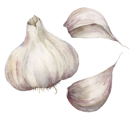 Watercolor garlic set. Hand painted food isolated on white background. Autumn harvest festival. Botanical illustration for design, print or background.