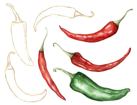 Watercolor chilli set. Hand painted gold linear peppers isolated on white background. Autumn harvest festival. Botanical illustration for design, print or background.