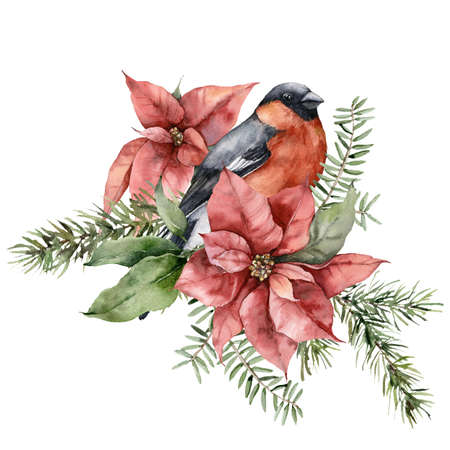 Watercolor Christmas card of bullfinch bird, poinsettia and fir branches. Hand painted holiday composition of flowers isolated on white background. Illustration for design, print, fabric, background.