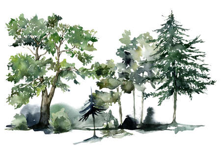 Watercolor nature card of abstract trees and bushes. Hand painted greenery illustration isolated on white background. 免版税图像