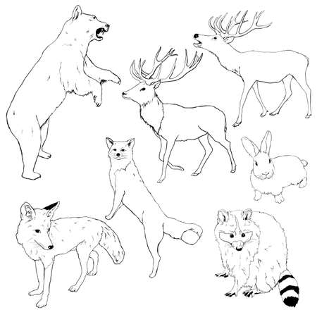 Vector set of linear animals. Hand painted bear, deer, fox, wolf, rabbit and raccoon isolated on white background. Wildlife illustration for design, print, fabric or background.