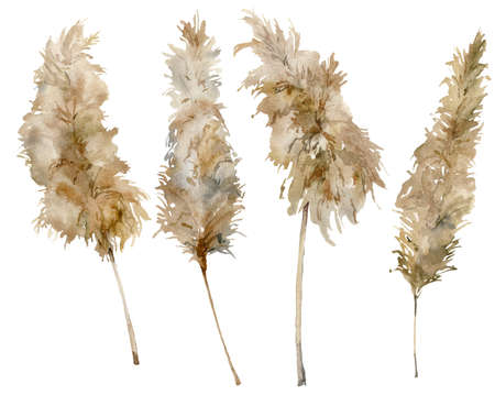 Watercolor exotic set of dry pampas grass. Hand painted tropical plant isolated on white background. Floral illustration for design, print, fabric or background. 写真素材