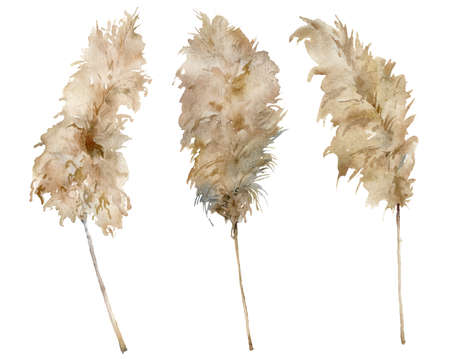 Watercolor tropical set of dry pampas grass. Hand painted exotic plant isolated on white background. Floral illustration for design, print, fabric or background.