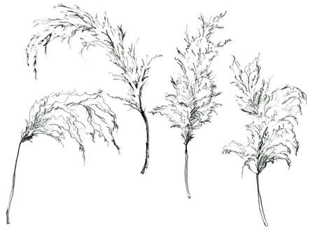 Pencil linear tropical set of black pampas grass. Hand painted exotic plant isolated on white background. Floral illustration for design, print, fabric or background. 写真素材