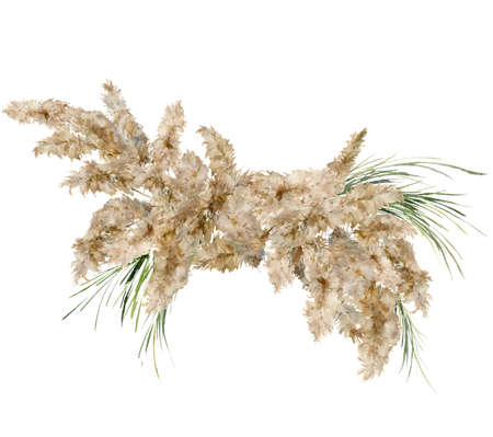 Watercolor tropical bouquet of dry and green pampas grass. Hand painted exotic card of plant isolated on white background. Floral illustration for design, print, fabric or background. 写真素材