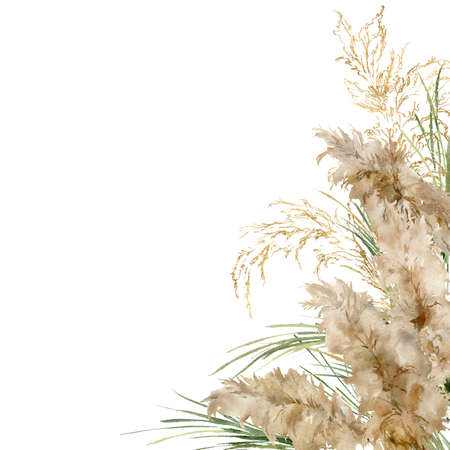 Watercolor square frame of gold and green pampas grass. Hand painted linear border of exotic dry plant isolated on white background. Floral illustration for design, print, fabric or background.