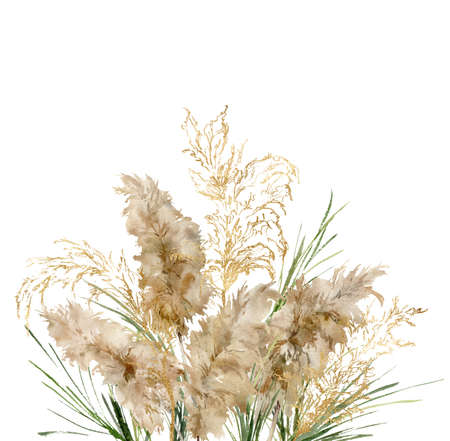 Watercolor tropical bouquet of green and gold linear pampas grass. Hand painted exotic card of dry plant isolated on white background. Floral illustration for design, print, fabric or background. 写真素材