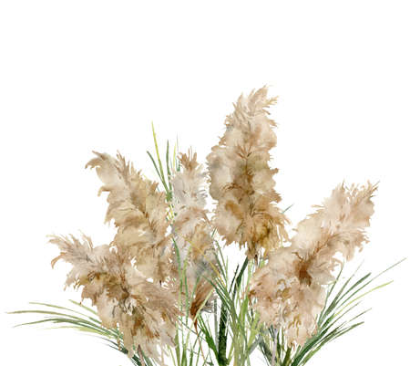 Watercolor tropical bouquet of green and dry pampas grass. Hand painted exotic card of plant isolated on white background. Floral illustration for design, print, fabric or background.