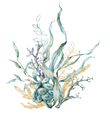 Watercolor tropical card of linear laminaria and gold corals. Underwater composition of plant and corals isolated on white background. Aquatic illustration for design, print or background. 写真素材
