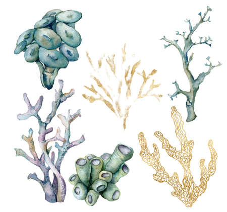 Watercolor tropical set of blue, gold, azure and violet corals . Underwater plant isolated on white background. Aquatic illustration for design, print or background. Trendy nautical collection.