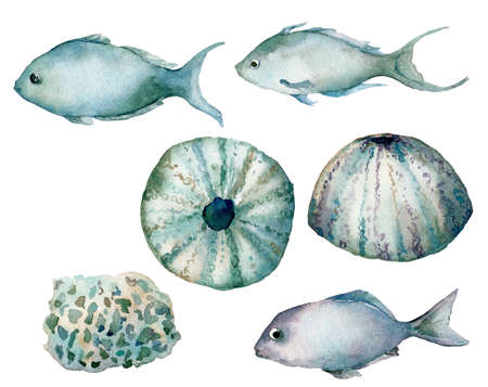 Watercolor underwater set of shells, fishes and urchin. Hand painted sea elements isolated on white background. Aquatic illustration for design, print or background. Trendy nautical collection. 写真素材