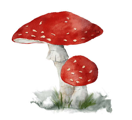 Watercolor mushrooms card of fly agaric. Hand painted plant isolated on white background. Botanical forest illustration for design, print, fabric or background.