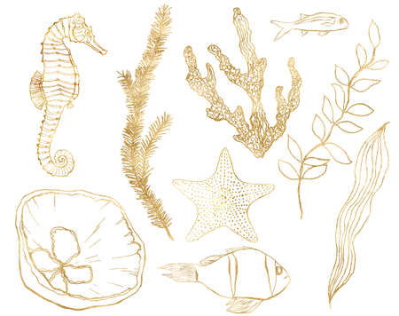 Watercolor tropical set of gold seahorse, shell, fish, coral and laminaria. Underwater linear plants and animals isolated on white background. Aquatic illustration for design, print or background.
