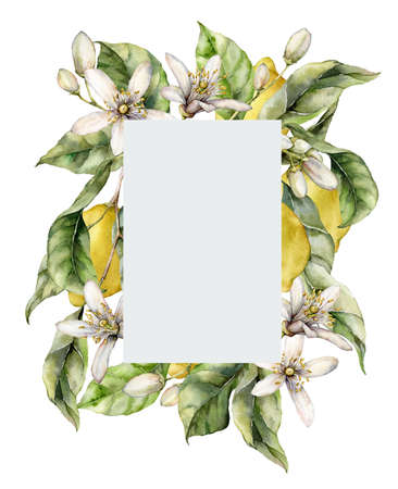 Watercolor gray frame of ripe lemons, leaves, flowers and buds. Hand painted tropical border of fruits isolated on white background. Tasty food illustration for design, print, fabric or background. 写真素材