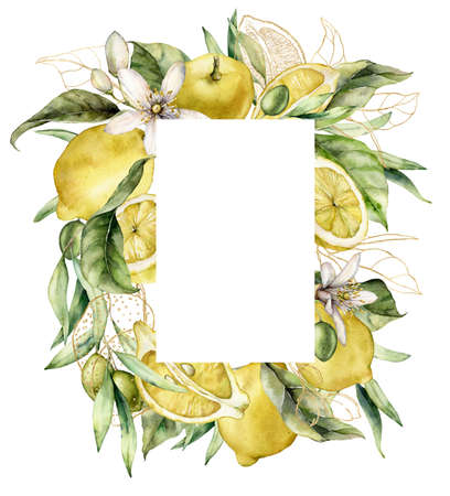Watercolor frame of ripe lemons, olives, gold leaves and linear flowers. Hand painted tropical border of fruits isolated on white background. Food illustration for design, print, fabric or background. 写真素材