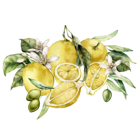 Watercolor tropical card of flowers, olives and ripe lemons. Hand painted branches of fruits and leaves isolated on white background. Tasty food illustration for design, print, fabric or background. 写真素材