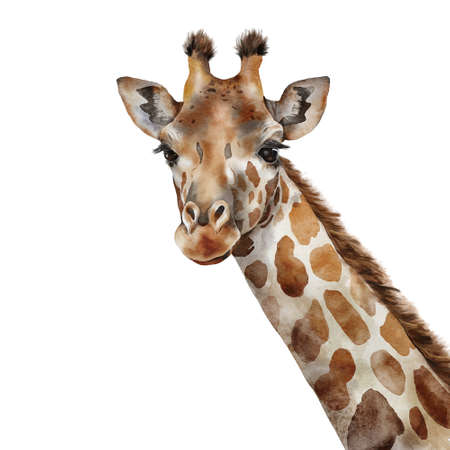 Watercolor African card of giraffe. Hand painted illustration of wild animal isolated on white background. For design, printing, fabric or background. Interior decoration.