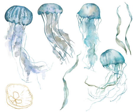 Watercolor tropical set of blue jellyfishes, gold linear shell and laminaria. Underwater animals and plant isolated on white background. Aquatic illustration for design, print or background. 写真素材