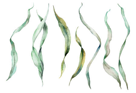 Watercolor green laminaria set. Hand painted underwater floral illustration with algae leaves isolated on white background. For design, fabric or print. 写真素材