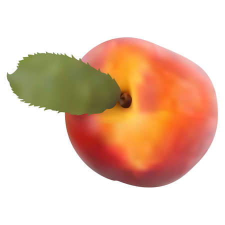 Peach fruit isolated on white background. Peach icon. 3d gradient. Vector Иллюстрация