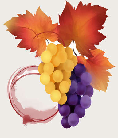 Bunches of white and red grapes with bright grape leaves. Spot of red wine