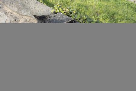 Een kat die op een steen ligt. Zal binnenkort bevallen?