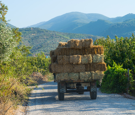 straw loaded tractor. Straw bale.  animal food. Stock Photo