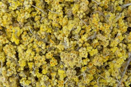 It is used as a medicinal plant against various disorders. yellow-colored plant.a wild plant. good for kidney and gall stones. İdrar yolunda oluşan taşları azaltın.
