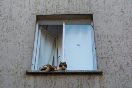 The cat came out of the window. watching around