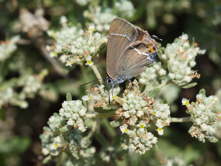 butterfly macro shot in nature. 版權商用圖片