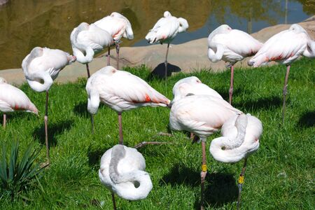 Beautiful, white, pink flamingos beside the pond.  wild nature life. Animals in Wildlife Stok Fotoğraf