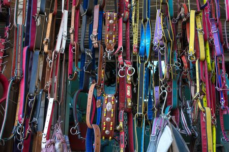 collars of various animals, straps. colored belts of various sizes Zdjęcie Seryjne